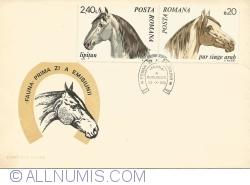 Fauna - Horses