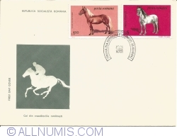 Horses from Romanian farms