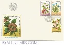 Medicinal Plants - Marshmallow (Althaea officinalis)