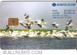 Imaginea #1 a Pelicani