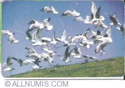 Imaginea #2 a Pelicani