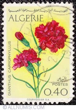 Image #1 of 0,40 Dianthus Caryophyllus - Eyelets 1969