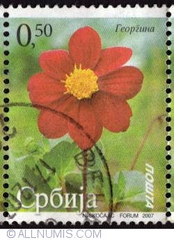 Imaginea #1 a 0,50 red flower 2007