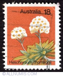 Image #1 of 18 Cent - Helichrysum thomsonii