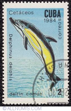 Image #1 of 2¢ Dolphin 1984