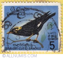 Image #1 of 5 cents W Grackle 1966