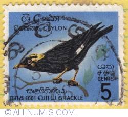 5 cents W Grackle 1966