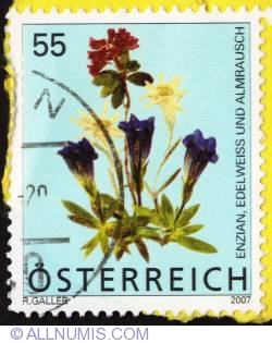 Image #1 of 55 Enzian-Edelweiss-Almrausch 2007