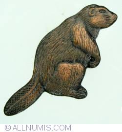 Imaginea #1 a Canada Beaver standing
