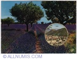 Image #1 of Digne-Lavender fields-1970