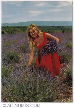 Image #1 of Digne-Lavender pick up-1970