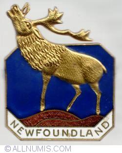 Imaginea #1 a Newfounland caribou