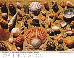 Image #1 of Tampa - Florida sea shells collection