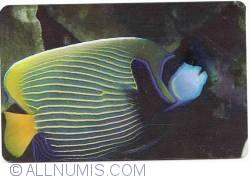 Fauna marina (1)