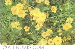 Image #1 of Flowers