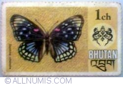 1 Chhertum Bhutan - Eastern courtier butterfly