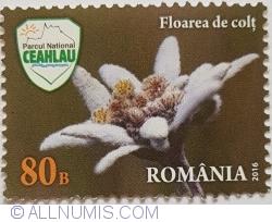80 Bani 2016 - Floarea de colț (Leontopodium alpinum)