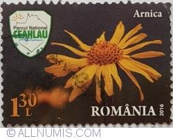 Image #1 of 1,30 lei 2016 - Arnica (Arnica montana L.)