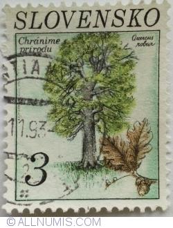 Image #1 of 3 Sk 1993 - Oak (Ouercus robur)
