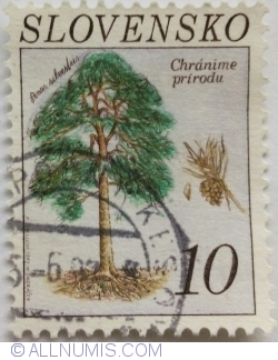 Image #1 of 10 Sk 1993 - Scots pine (Pinus sylvestris)