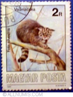 Imaginea #1 a 2 Forint 1986 - Pisica salbatica - Felis silvestris