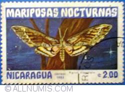 Image #1 of 2,00 Centavos 1983 - Agrius cingulato