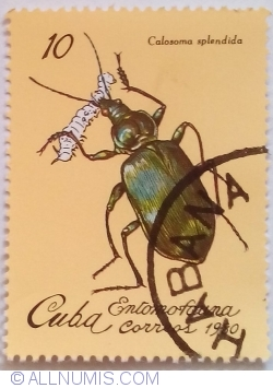 Image #1 of 10 Centavos 1980 - Calosoma splendida