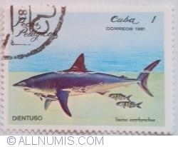 Image #1 of 1 Centavo 1981 - Rechin mako cu înotătoare scurte (Isurus oxyrinchus)