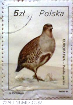 Image #1 of 5 zloty 1986 - Kuropatva-Perdix perdix