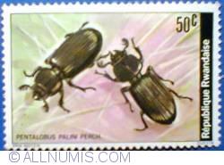 Image #1 of 50 santime 1978 - Pentalobus palini perch.