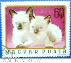 Image #1 of 60 Fills - Felis domestica