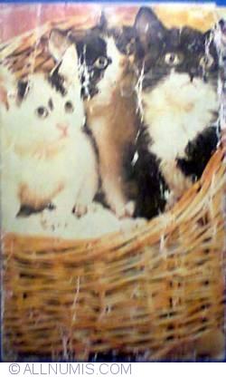 Image #1 of Kittens
