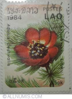 Image #1 of 0.50 kip 1984-Adonis aestivalis