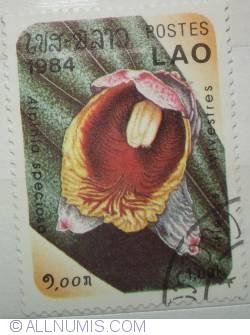 Image #1 of 1.00 kip 1984 Alpinia specioso