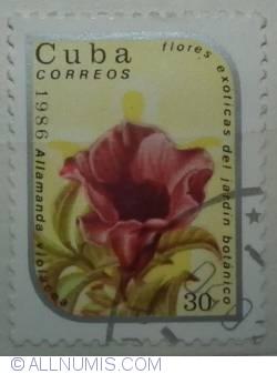 Image #1 of 30 centavos 1986 Allamanda violacea