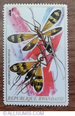 Image #1 of 1 Franc 1973 - Insecte - Viespe (Archibracon fasciatus)