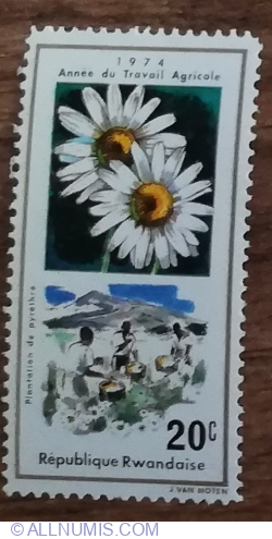 Image #1 of 20 Santime 1975 - Anul lucrărilor de teren; produse agricole - Plantare de piretru