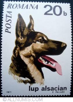 Image #1 of 20 Bani - German Shepherd