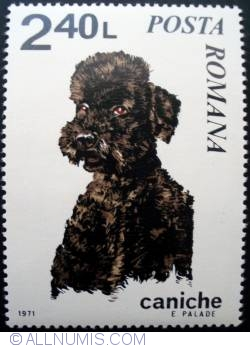 Image #1 of 2.40 Lei - Poodle