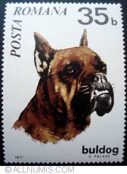 Image #1 of 35 Bani - German Boxer