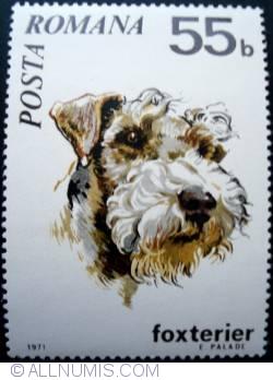 Image #1 of 55 Bani - Fox Terrier
