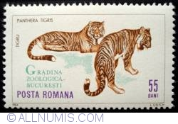 Imaginea #1 a 55 Bani - Tigri