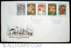 Image #1 of Edible mushroom