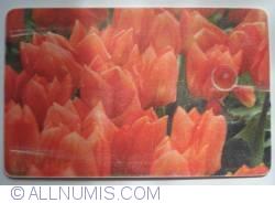 Imaginea #1 a Flori (4)