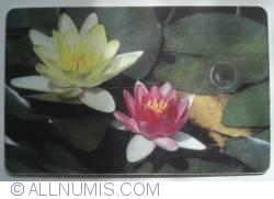 Imaginea #1 a Flori (6)