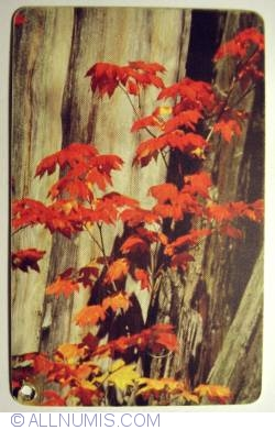 Image #1 of Autumn Leaves (1)