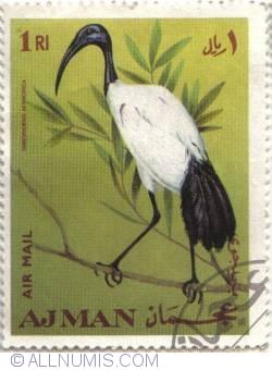 1 Riyal  - Ajman African Sacred Ibis