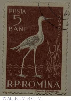 5 Bani 1957 - Piciorong