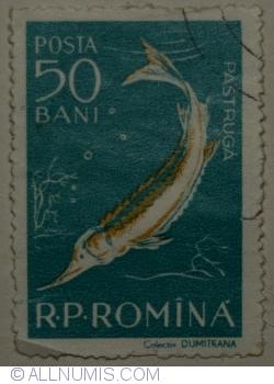 Imaginea #1 a 50 Bani 1957 - Păstrugă