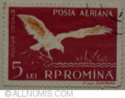 Imaginea #1 a 5 Lei 1957 - Vultur Codalb